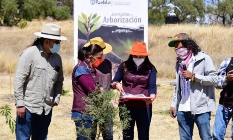 Arranca arborización 2021 en el Cerro de Amalucan