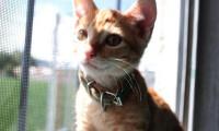 Ningún animal merece ser abandonado: dueño de gato