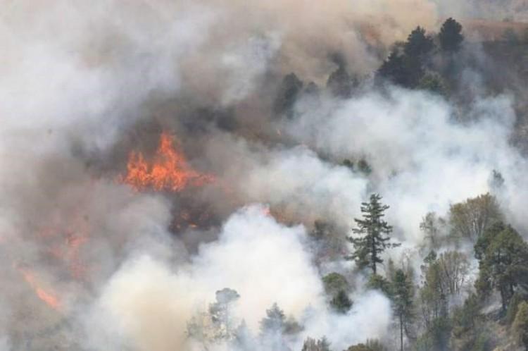 Incendio forestal consume más de 4 hectáreas en la Sierra Negra