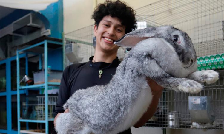 Estudiante cría los conejos más grandes del mundo en Puebla