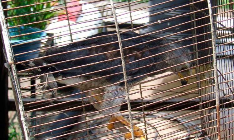 La Buap busca combatir comercio de animales exóticos en internet