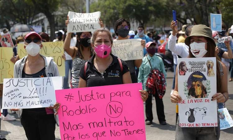 ¡No al maltrato animal! Marchan en Puebla contra la crueldad animal y exigen castigos a maltratadores