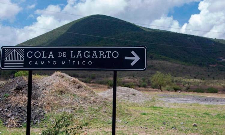 Logran recuperar 100 hectáreas de Cola de Lagarto