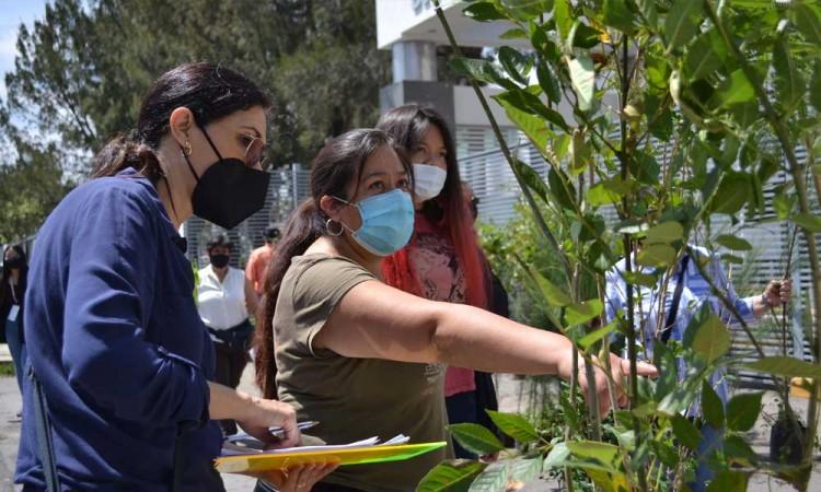 Como parte de programa Adopta un árbol, rector Buap entrega más de 800 especies