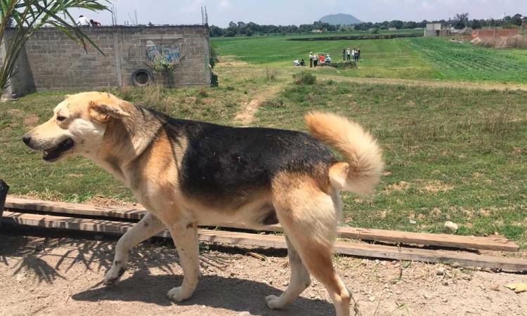 """""""Los perros están vivos"""", dice dueña de Spay, uno de los dos animales que cayeron al socavón"""