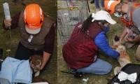 Entre la lluvia, rescatan a los dos perros que habían caído al socavón