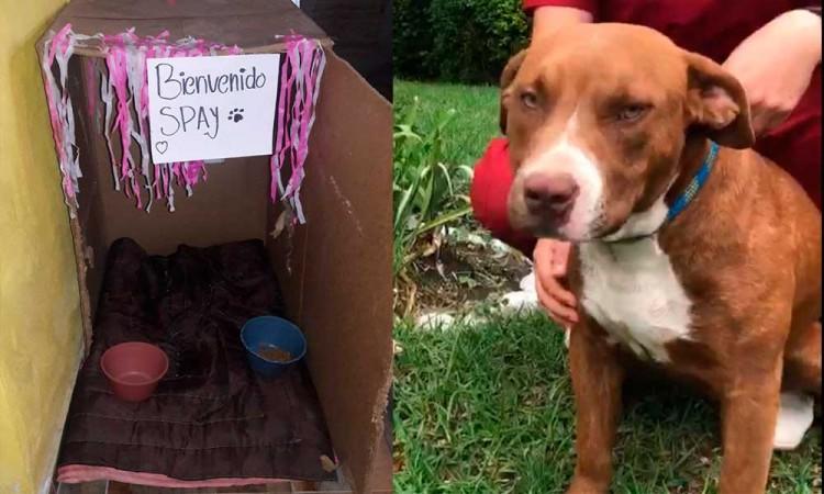"""""""Bienvenido Spay"""", así recibirán en su hogar a uno de los perros rescatados del socavón"""