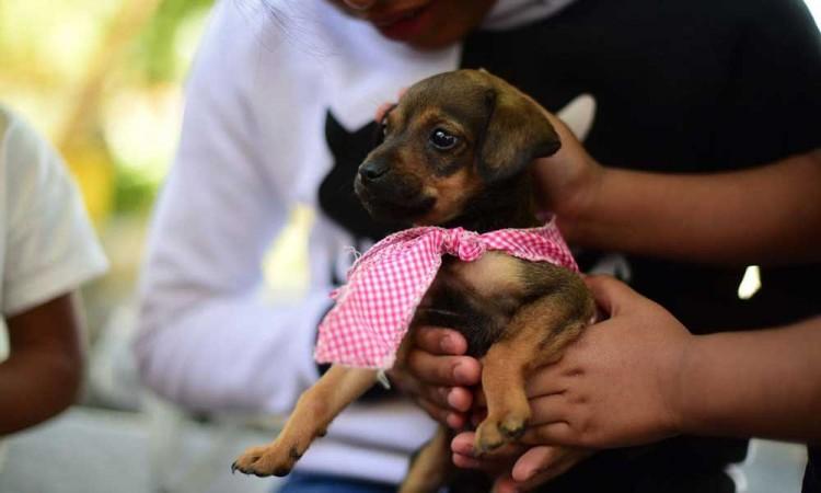 Mantiene Ayuntamiento de Puebla servicios del departamento de Protección Animal