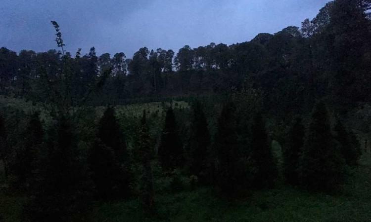 Luciérnagas: luces que iluminan el bosque de Santa Rita Tlahuapan, Puebla