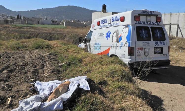 Causa alarma perro embolsado en un cultivo de Chachapa