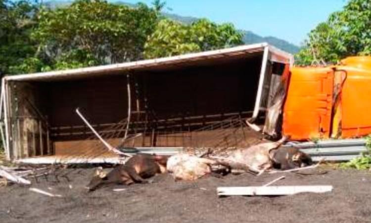 Vuelca camión en vía a Tuxpan; mueren 4 toros