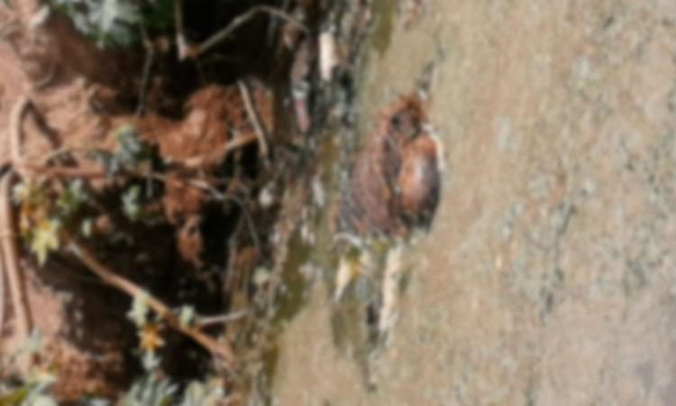Encuentra cadáver envuelto en malla ciclónica de Tecamachalco