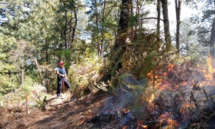 Fuego consume cinco hectáreas de matorral en Huauchinango