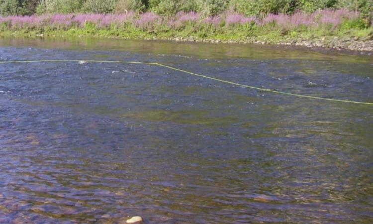 Encuentran cuerpo sin vida flotando en río de Tilapa