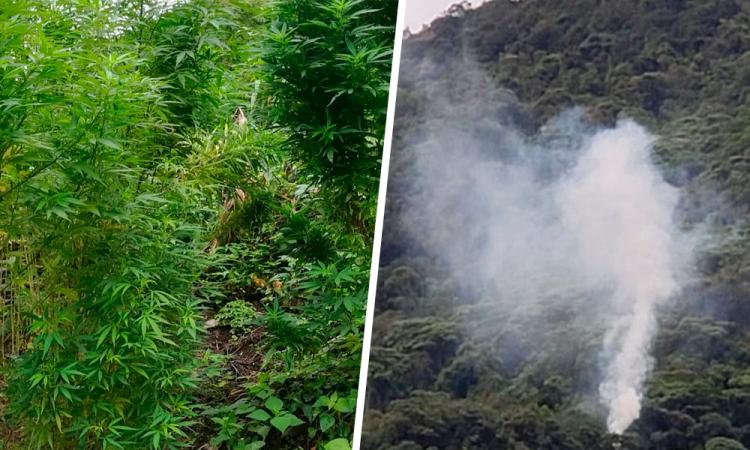 Descubren sembradío de marihuana en Zapotitlán