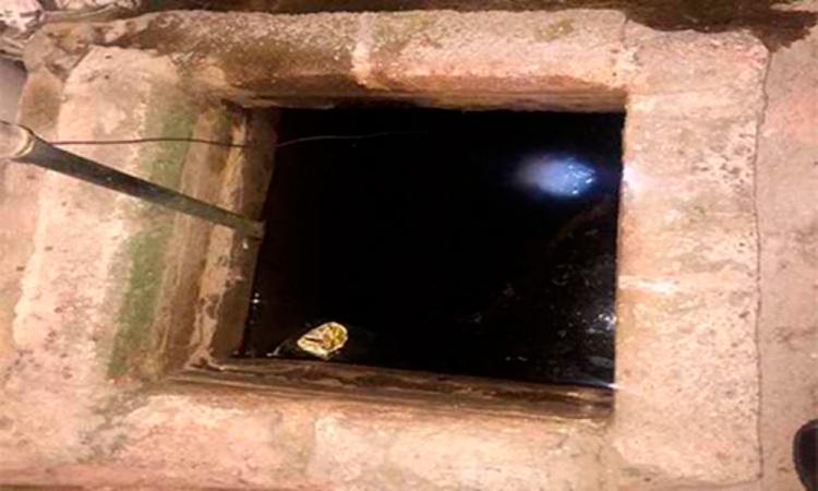 Presunto cadáver en Xonaca resulta ser de un canino