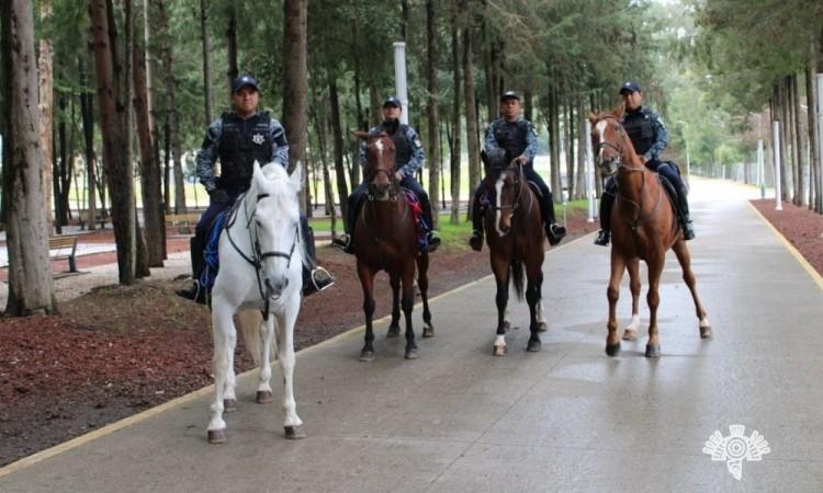 Pasan hasta 2 años para que un caballo pueda participar en labores de patrullaje, antidisturbios y de proximidad social.