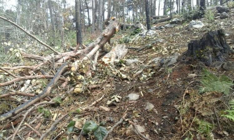 El hombre y los troncos fueron puestos a disposición de la Delegación Puebla de la FGR.