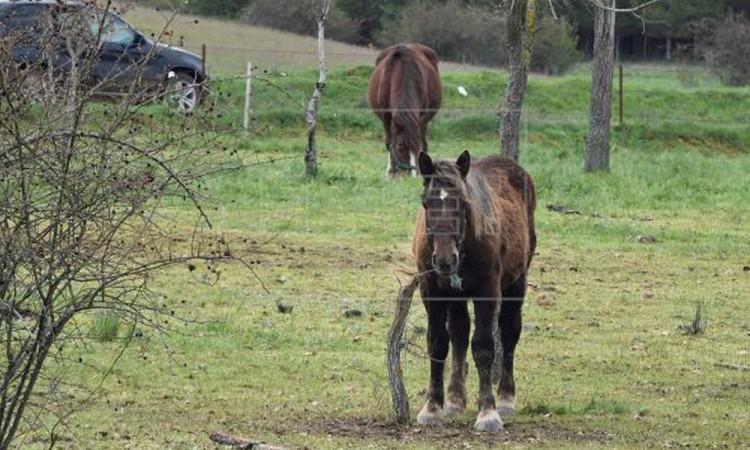 Muere hombre al caer de su caballo en Huehuetlán El Chico