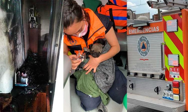 Incendio causó daños en casa ubicada en La Guadalupana, paramédicos valoraron a habitantes y a un perro